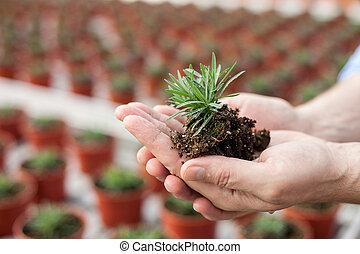 bekwaam, senior, bloemist, is, werken aan, het centrum van de tuin
