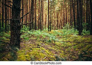 belarus, stary, since, drugi, trenches, wojna, las, świat,...