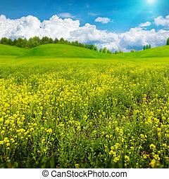 beleza, dia verão, ligado, a, prado, abstratos, paisagem rural, para, seu, desenho