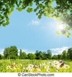 beleza, dia verão, ligado, a, prado, natural, fundos