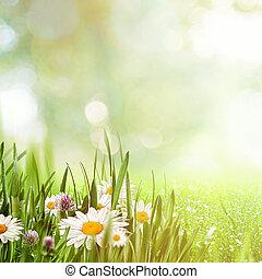 beleza natural, fundos, desenho, chamomile, flores, seu