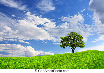 beleza, natureza