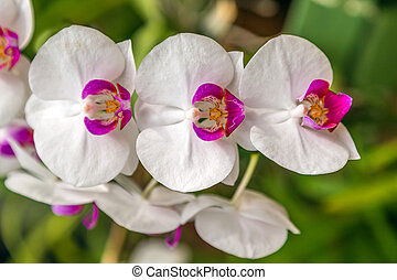 beleza, natureza, cartão postal, primavera, fundo, floral