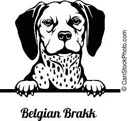 Belgian Brakk - Peeking Dog. Dog head - black and white ...