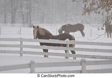 Belgian Draft Horse in the snow storm