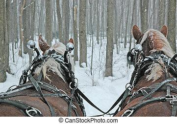 Belgian Draft Horse Team in Snow storm