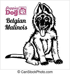 Belgian Malinois puppy sitting. Drawing by hand, sketch. ...