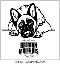 Belgian Malinois - vector illustration for t-shirt, logo and...