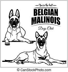 Belgian Malinois - vector set isolated illustration on white...