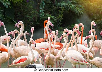 beliggende, flamingo, fugle