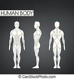 beliggende, fuld krop, udsigter, tilbage, længde, muskel, forside, mand