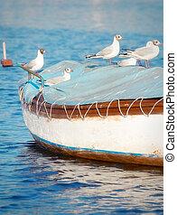 beliggende, træagtig top, seagulls, lille båd