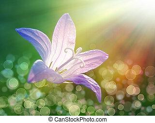 bell-flower, roxo, sol, sob