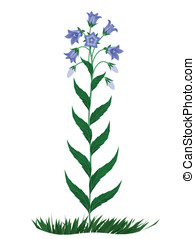 Bell flowers - The image of flowers of family campanula...