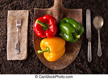 Bell Peppers - Organic farm to table healthy eating concept ...