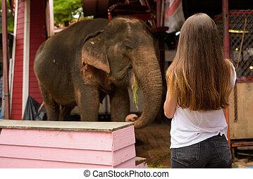 bella donna, turista, detenere, vacanza, giovane, tailandese, ayutthaya