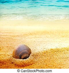 bella sabbia, conchiglia mare