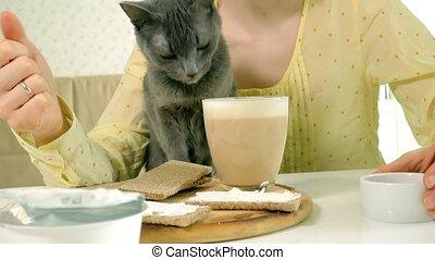 belle femme, jeune, chat, matin, cuisine