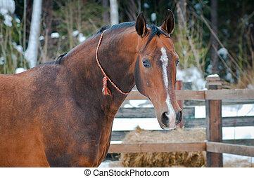 bellen pferd, auf, winters, sattelplatz