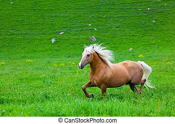 bellen pferd, gleichfalls, gehen, in, der, electroshepherd