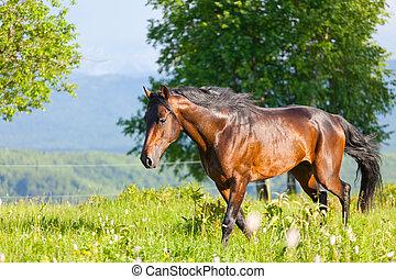 bellen pferd, gleichfalls, gehen, in, der, electroshock