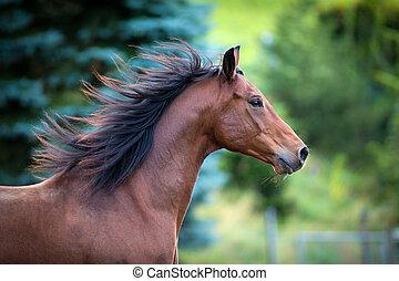 bellen pferd, porträt, auf, grüner hintergrund