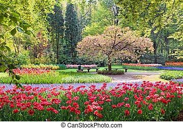 belleza, árbol, en el flor, con, banco