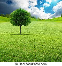 belleza, día de verano, en, el, pradera verde, natural, paisaje