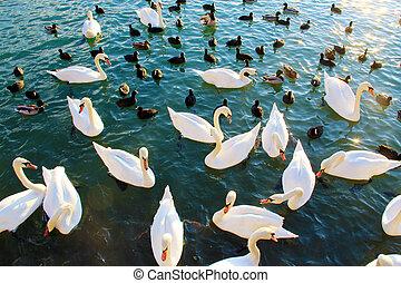 belleza, en, el, lago
