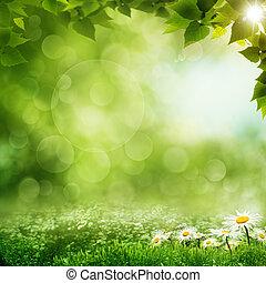 belleza, mañana, en, el, bosque verde, eco, fondos