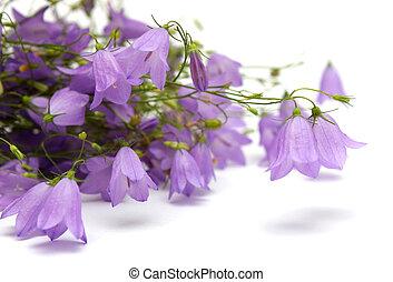 Bellflowers