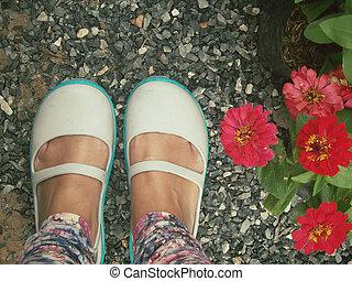 bellis, blomster, hos, sko
