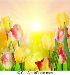 bello, 10, tulips., eps, mazzolino