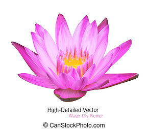 bello, acqua, fiore, illustrazione, zen, lotus., tropicale, vettore, giglio, plant.