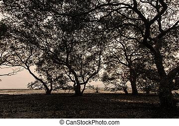 bello, albero, natura