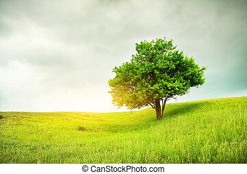 bello, albero quercia, su, campo verde