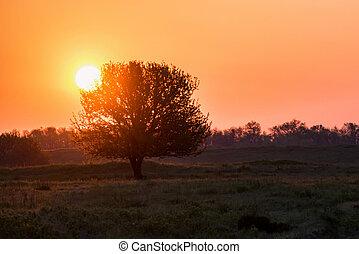 bello, albero, silhouette, steppa, alba