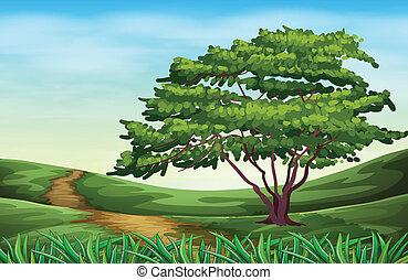 bello, alto, paesaggio albero