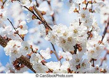 bello, arte, primavera, scena astratta, sfocato, bordo, rosa, sole, day., fondo., flowers., pasqua, natura, soleggiato, flare., fondo, frutteto, springtime., blossom., albero, azzurramento, o