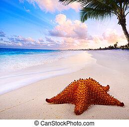 bello, arte, stella mare, spiaggia, paesaggio