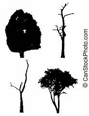 bello, asciutto, albero, bianco, fondo