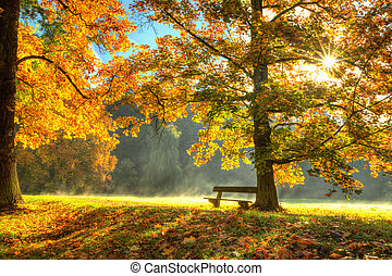 bello, asciutto, foglie, albero, autunno, caduto