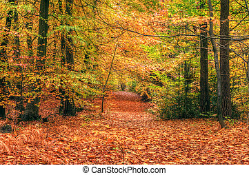 bello, autunno, cadere, foresta, scena