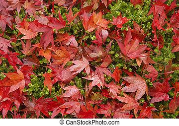 bello, autunno, cadere, scena, foresta