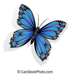 bello, blu, farfalla, isolato
