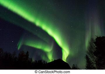 bello, borealis, albero, aurora, cime, sopra