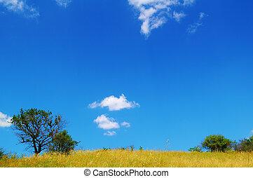 bello, campo giallo, e, albero, sopra, cielo blu