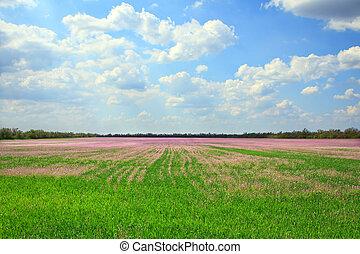 bello, campo, lavanda, paesaggio
