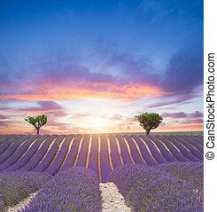 bello, campo, lavanda, paesaggio, azzurramento