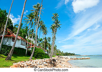 bello, casa, con, palmizi, spiaggia